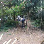 Stake fencing install Ashford